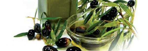 olive oil on branch03a